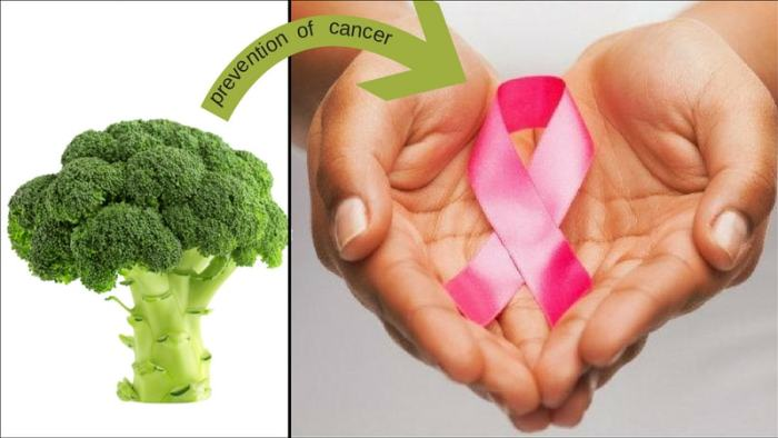 broccoli in the prevention of cancer