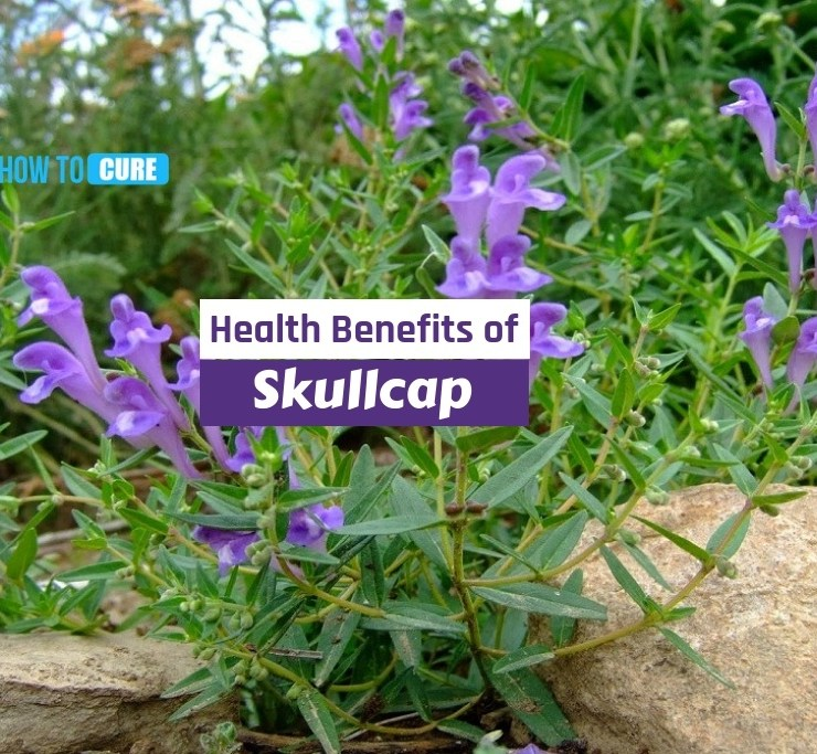 health benefits of skullcap