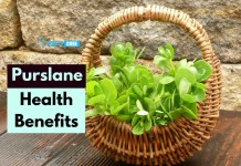 purslane benefits to stay fit and healthy