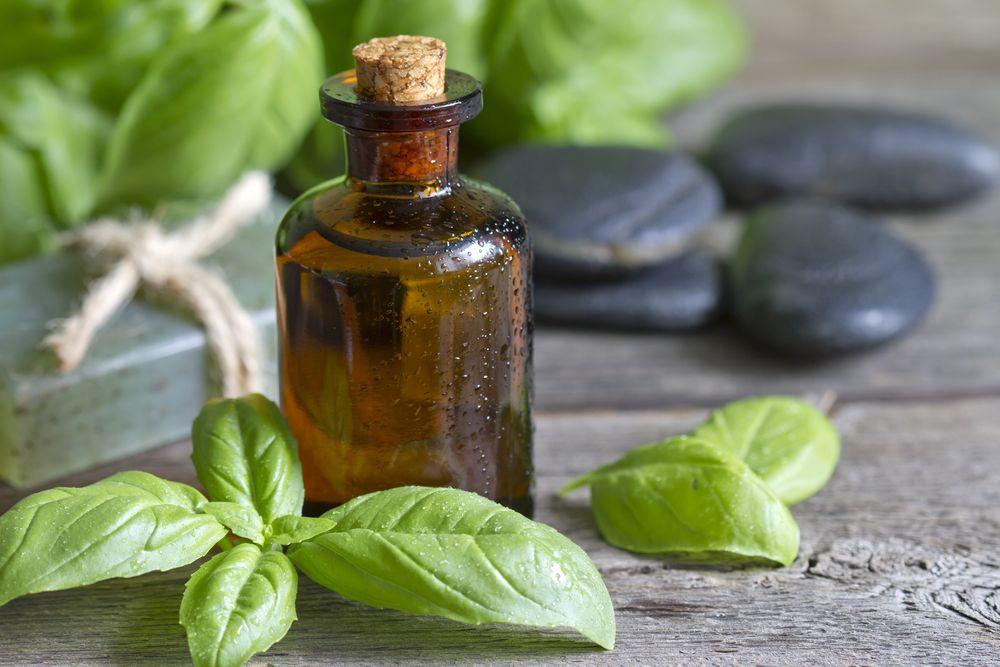 basil oil for allergies