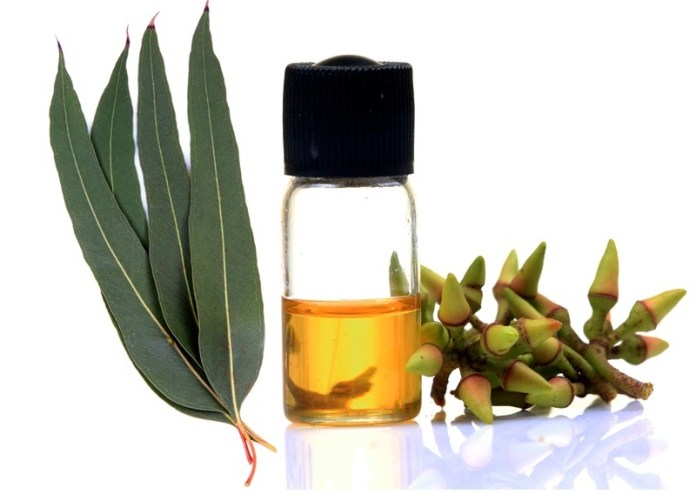 eucalyptus oil to pregnancy