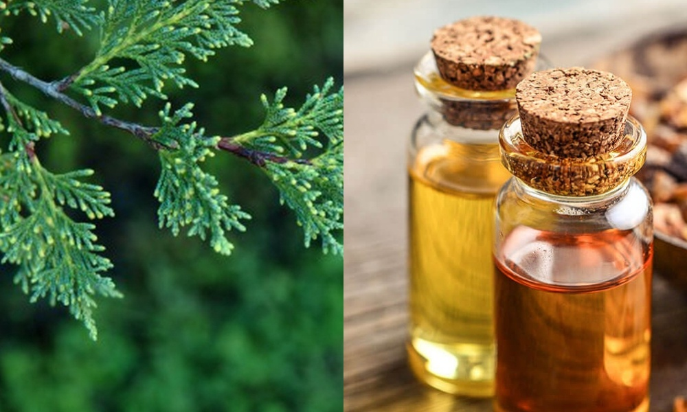 cypress oil for hot flashes