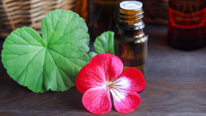 geranium oil for poison ivy