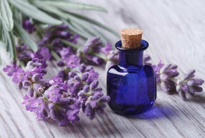 lavender oil for teething