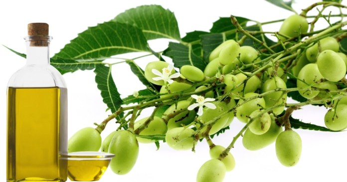 neem oil for poison ivy