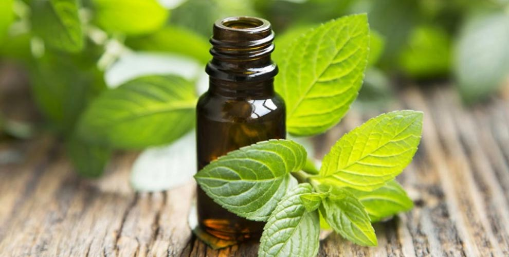 peppermint oil essential oils for arthritis