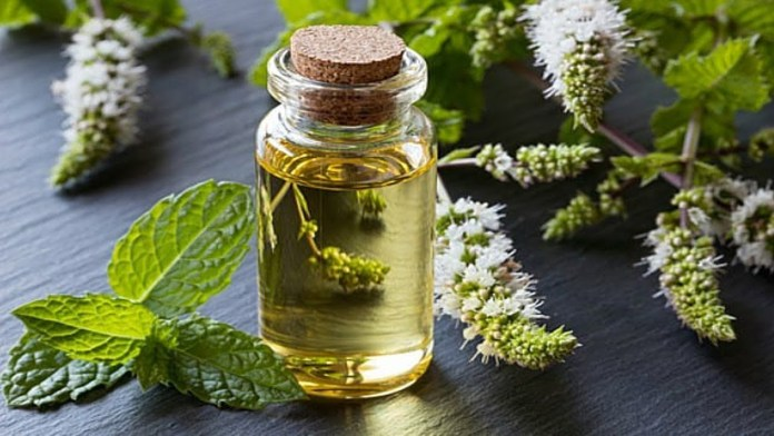 peppermint oil for sinus infection