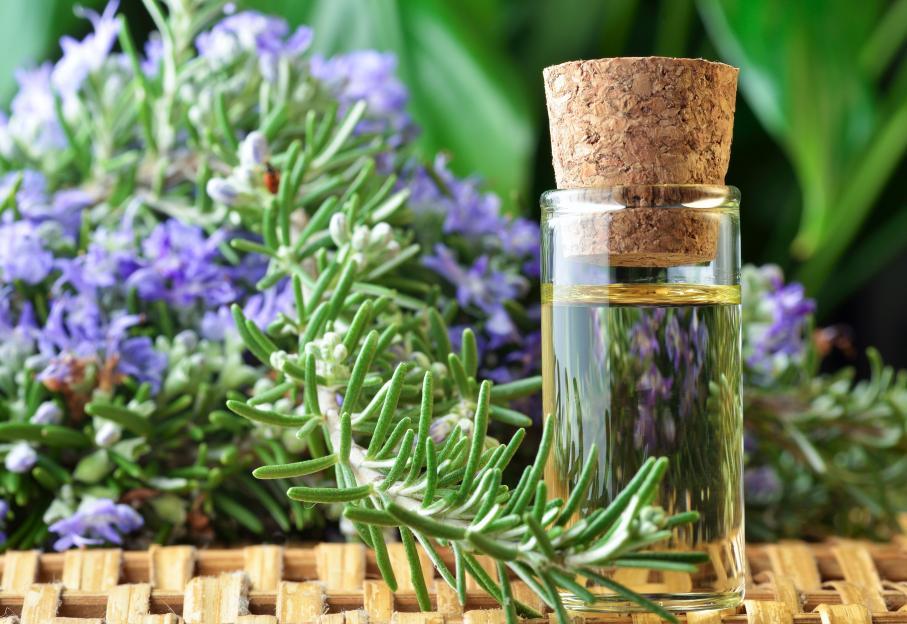 rosemary oil for pain