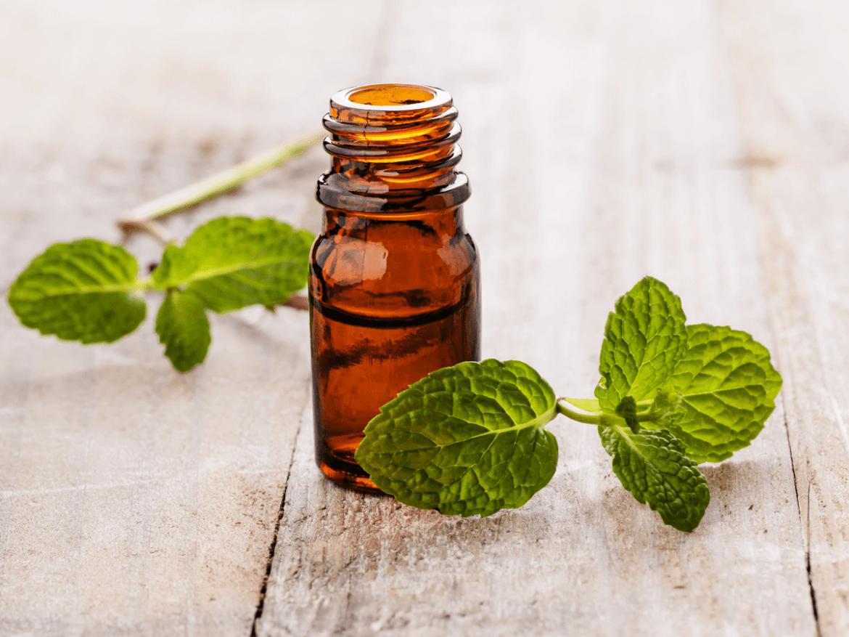 spearmint essential oil for nausea