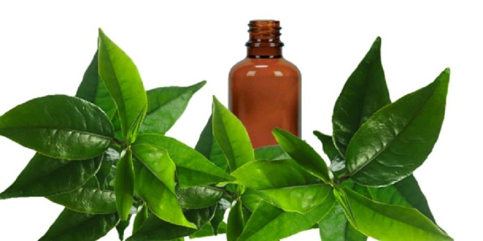 tea tree oil for bruises
