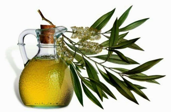 tea tree oil for candida