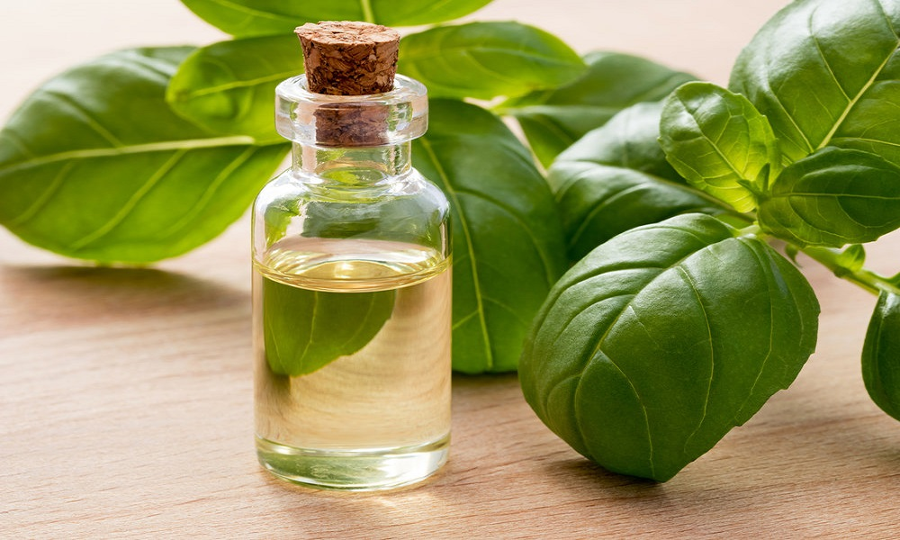 basil oil for dizziness