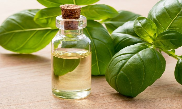 basil oil for dizziness