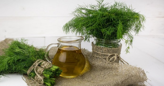 dill oil for babies