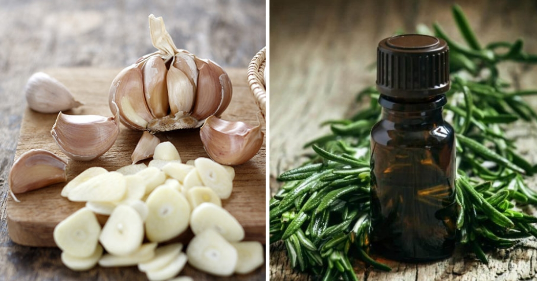 garlic and tea tree essential oil for warts removal