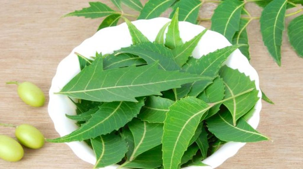 neem for cure blemishes