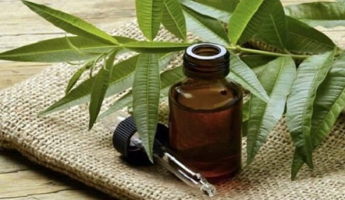 tea tree essential oil for aging