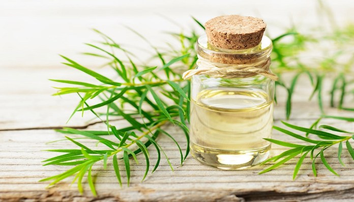 tea tree oil for stop itchiness in the scalp
