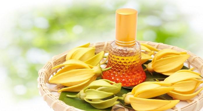 ylang ylang essential oil for hair loss