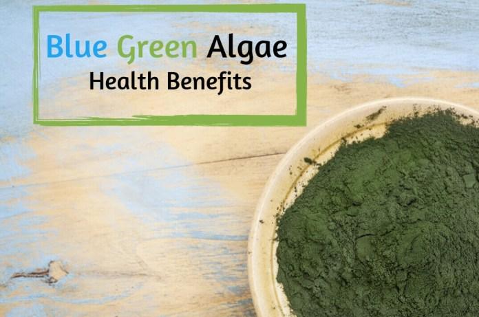 Blue Green Algae
