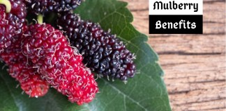 Mulberry benefits (2)
