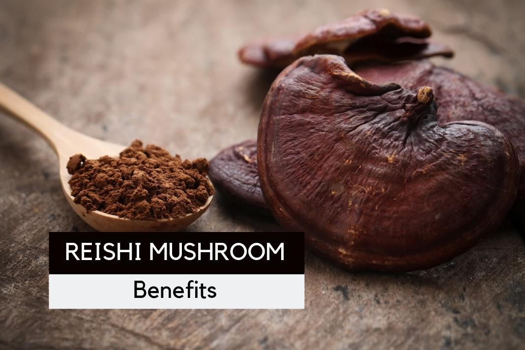 Reishi Mushroom Benefits