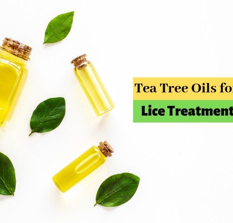 Tea tree oil for lice treatment