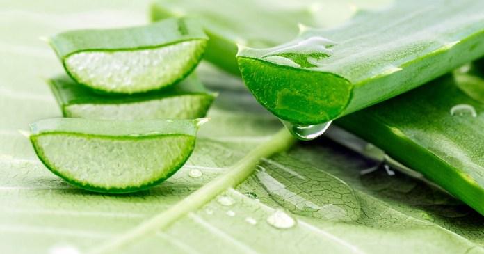 aloe vera gel for perioral dermatitis