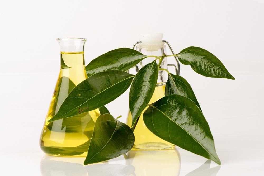 camphor essential oil for calming