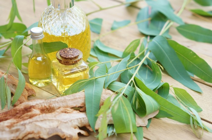 eucalyptus essential oil for hot pan burn