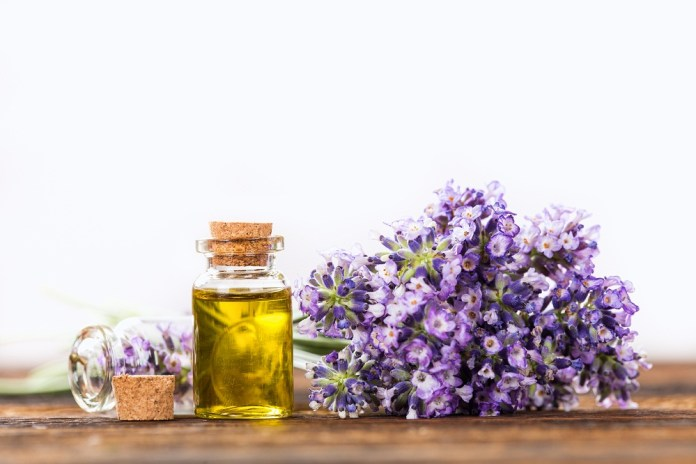 lavender essential oil for the immune system