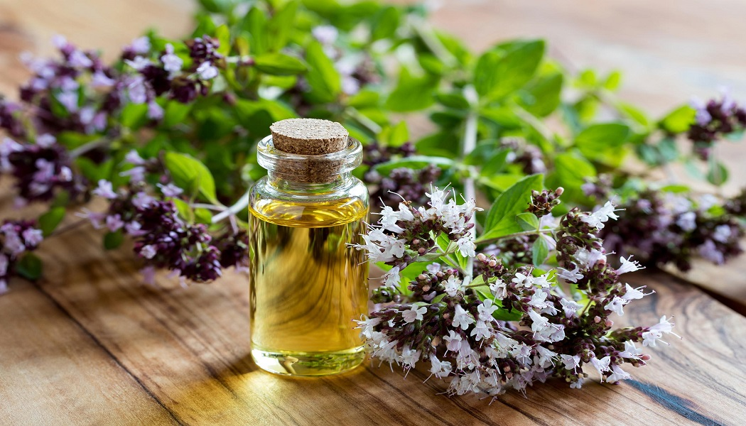 oregano essential oil for bloating