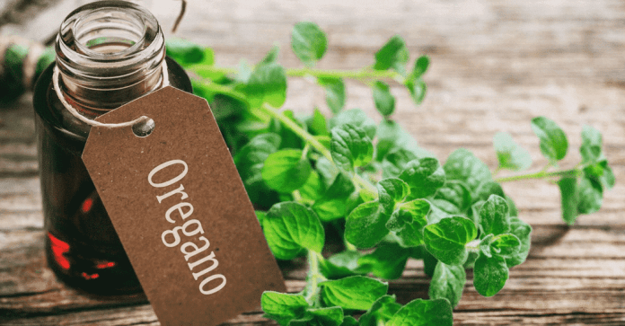 oregano essential oil for fungal infections