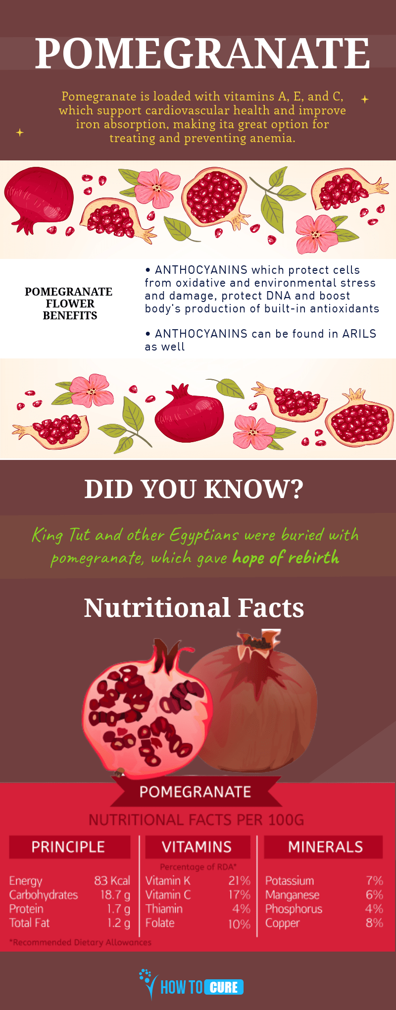 pomegranate - infographic