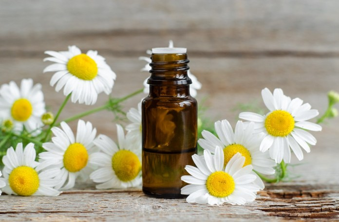 roman chamomile essential oil for anger