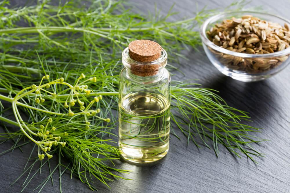 fennel ess oil