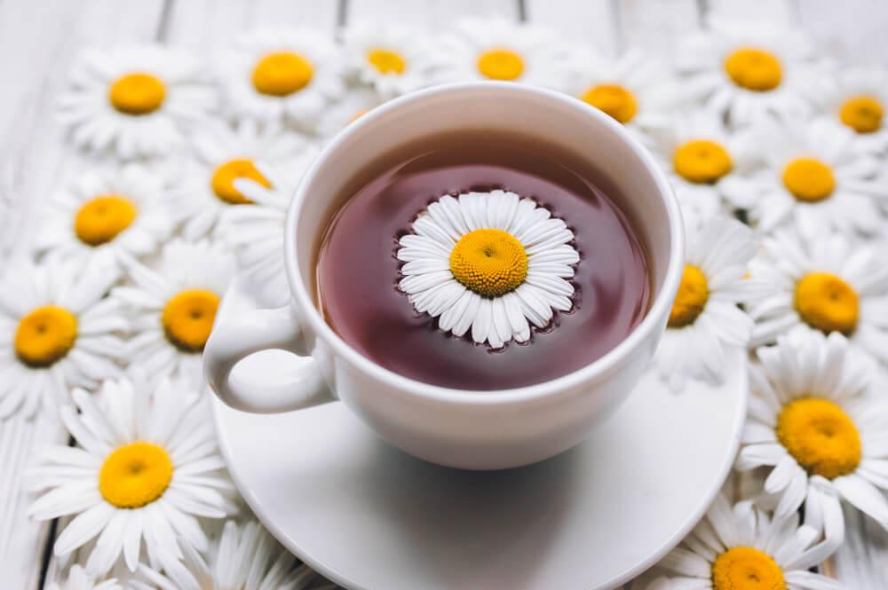 Chamomile tea for pregnancy