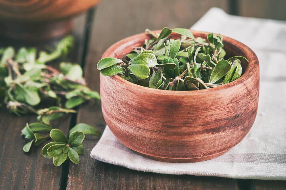Bearberry Leaf Benefits
