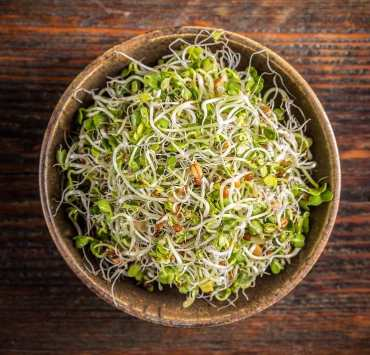Benefits of Alfalfa Sprouts