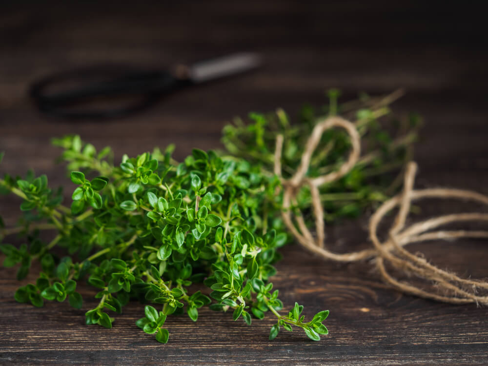 herbs for bronchitis