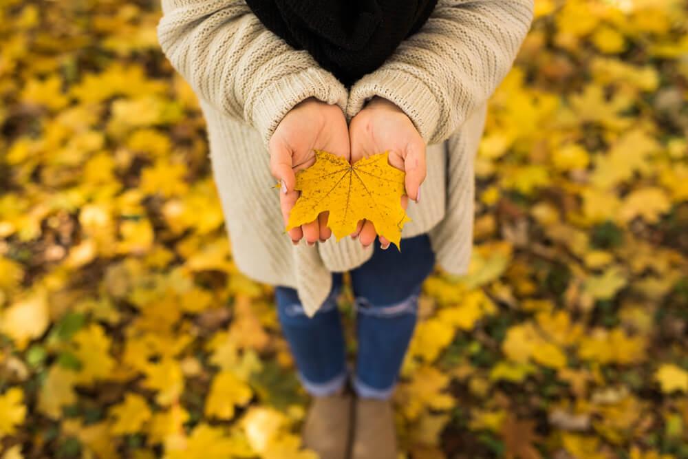 observing a leaf - mindfulness