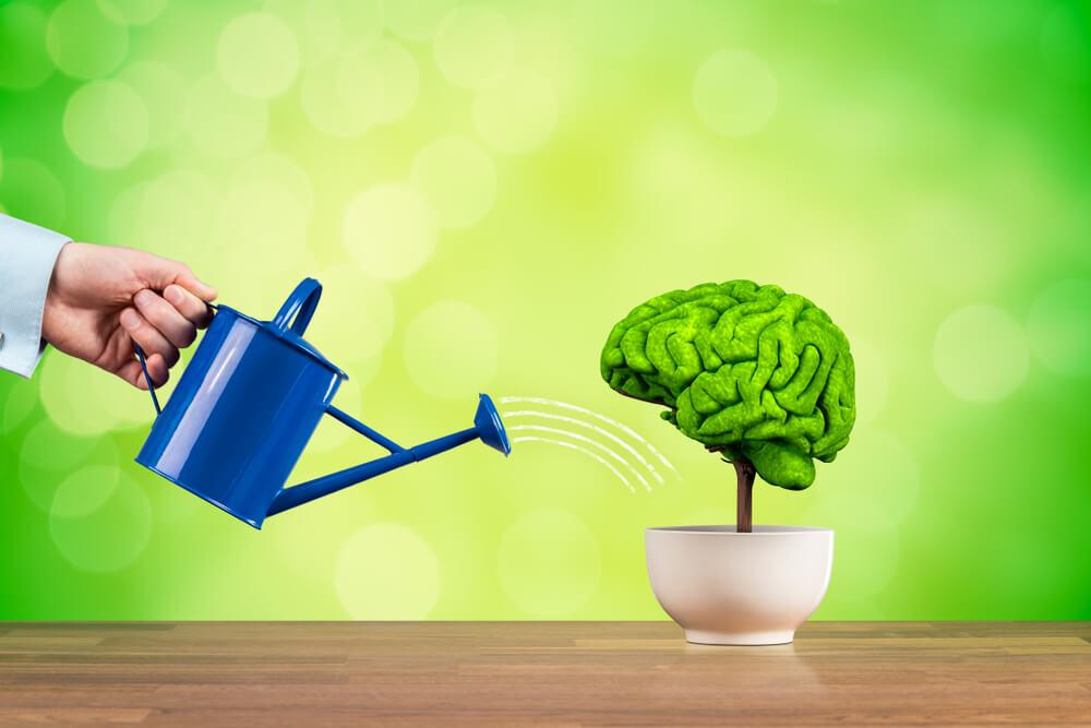Improving Brain Function