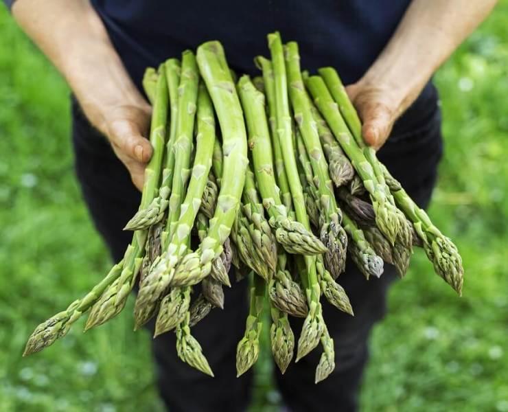 Asparagus for Cancer