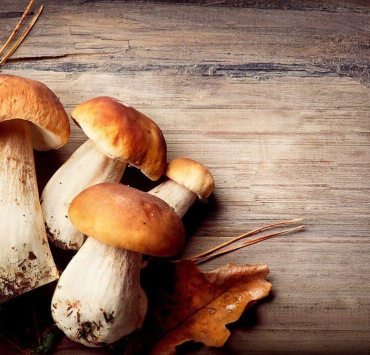 Mushroom for cancer