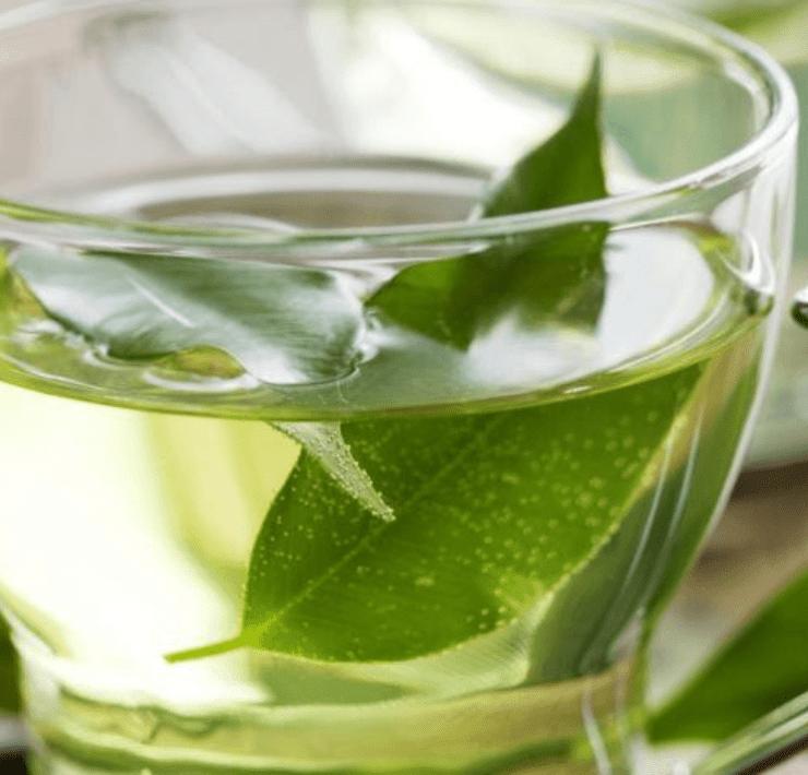 benefits of boldo tea