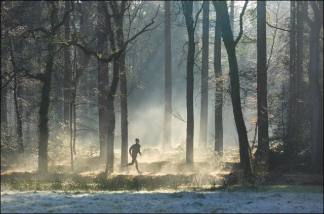 A runner in a misty forest.