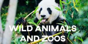 ielts essay Wild Animals and Zoos