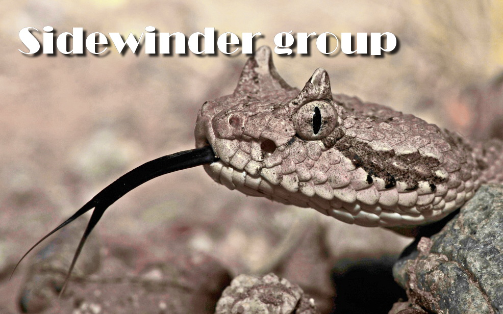 Grouping Sidewinder on Google Play