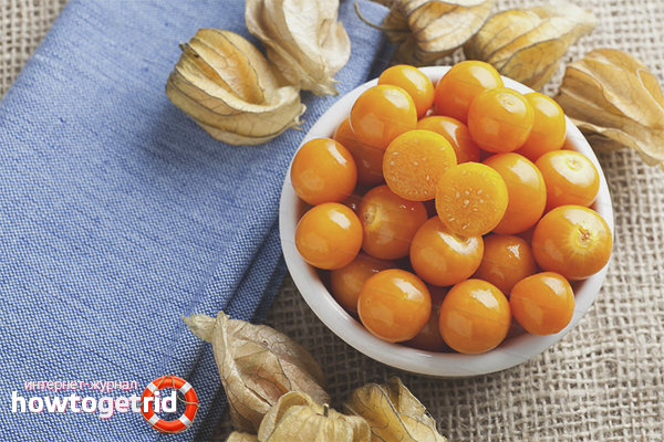Physalis is edible as it is  Physalis useful properties