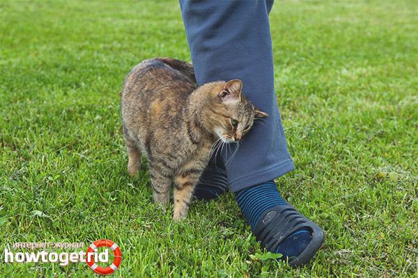Почему кот трется об ноги хозяина. Почему коты часто трутся о ноги человека? Почему кошек часто привлекают люди, равнодушные к ним